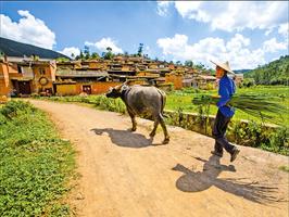 留住被遺忘的時光──雲南瀘西縣城子古村