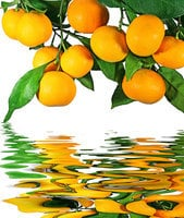 為甚麼藥房的匾額上書「橘井流香」