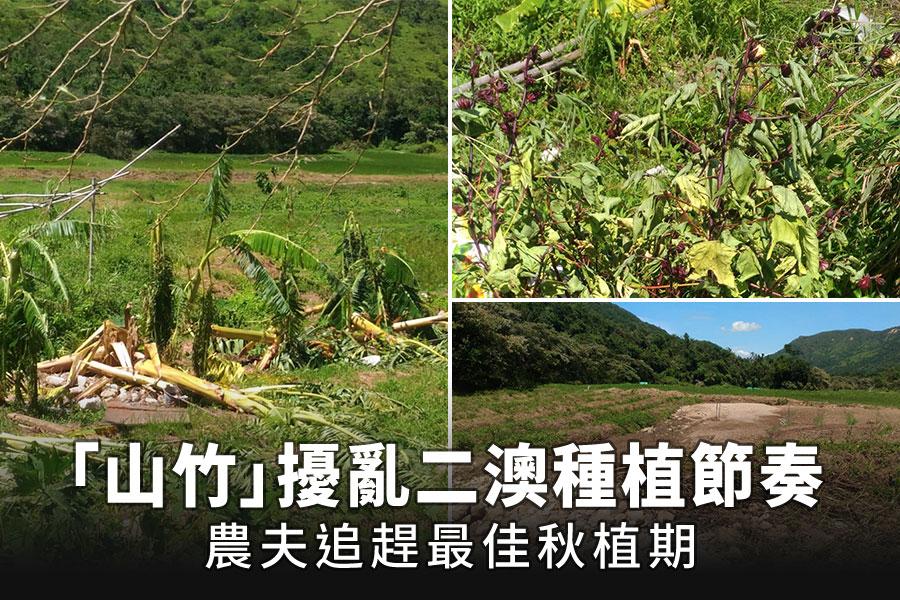 二澳農作社,受到颱風「山竹」衝擊之後,部份農作物遭到損毀,河堤被沖崩。(受訪者提供)