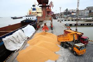 貿易戰致大豆短缺 中國4億頭豬被迫「節食」