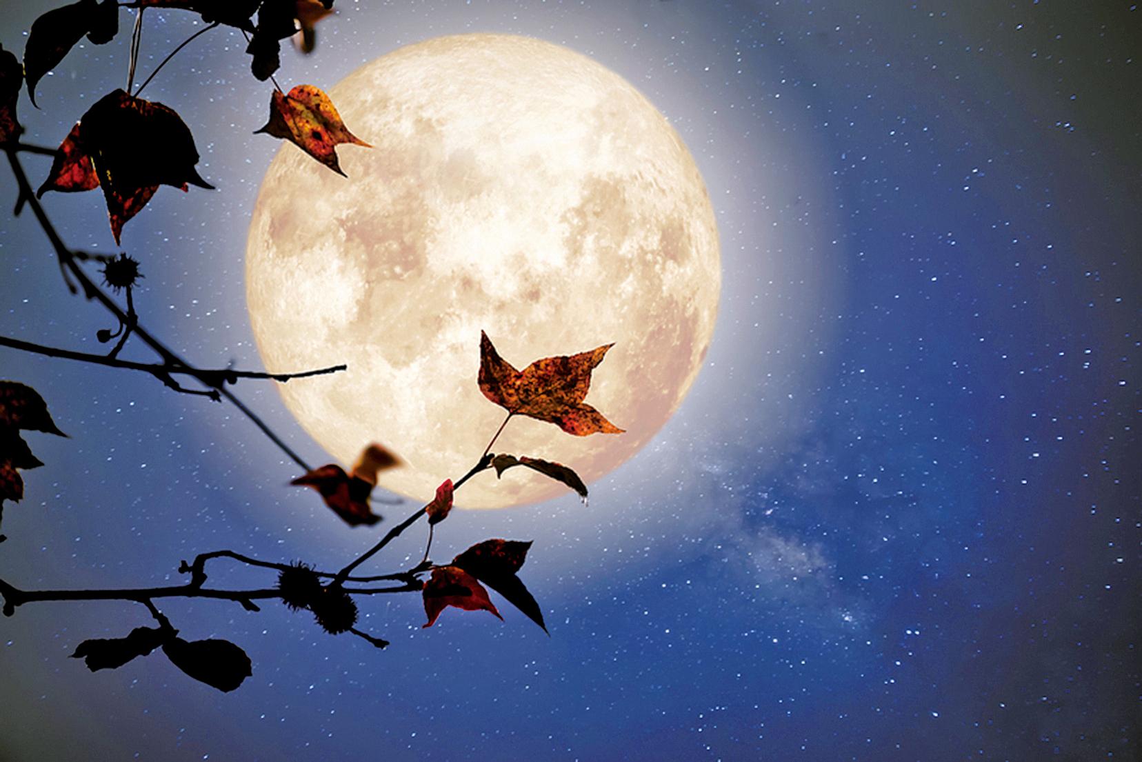 美麗的秋天幻想-楓樹在秋季和滿月與銀河系明星在夜空中(fotolia)