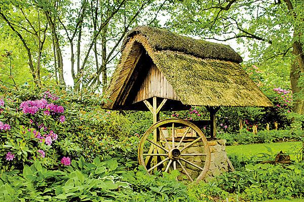 蘆葦屋頂(圖片來源:pixabay)