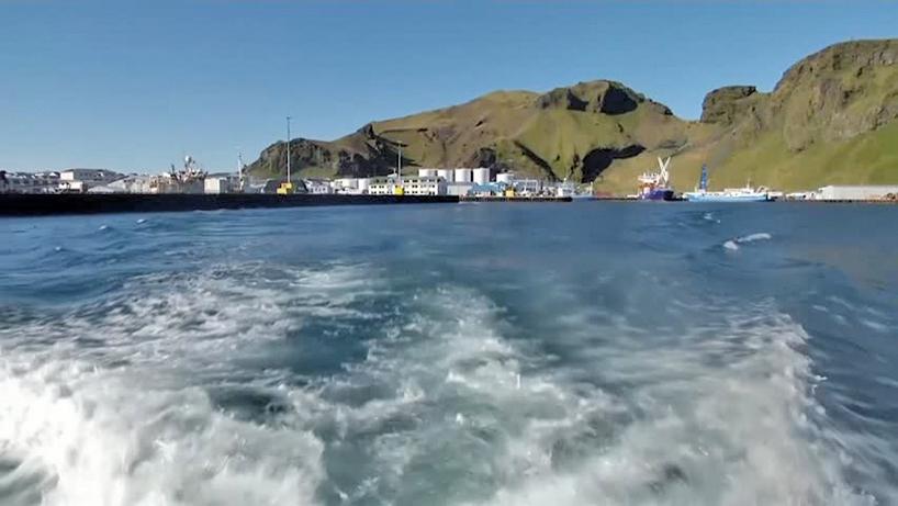 冰島建鯨魚休棲地 讓被囚鯨魚回歸自然