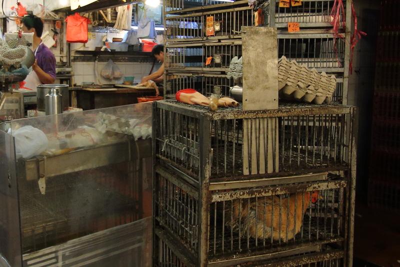 本港暫停活雞供應四日後,昨日恢復供應本地活雞,適逢端午節即使雞價上調約一成,不少檔口亦很快賣清。(蔡雯文/大紀元)