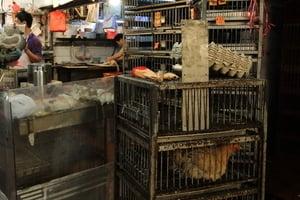 端午復供活雞售價升一成