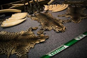 中共將犀牛角和虎骨買賣合法化 遭國際批評