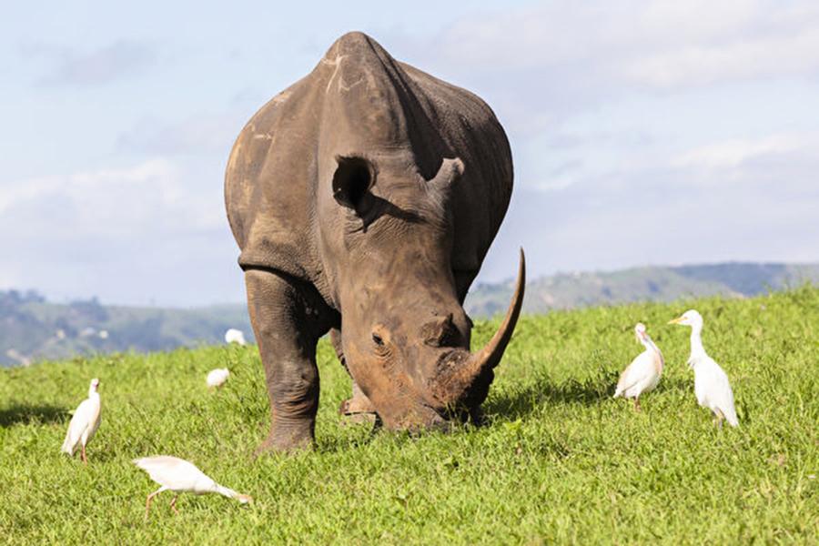 世界自然基金會:44年來脊椎動物銳減60%