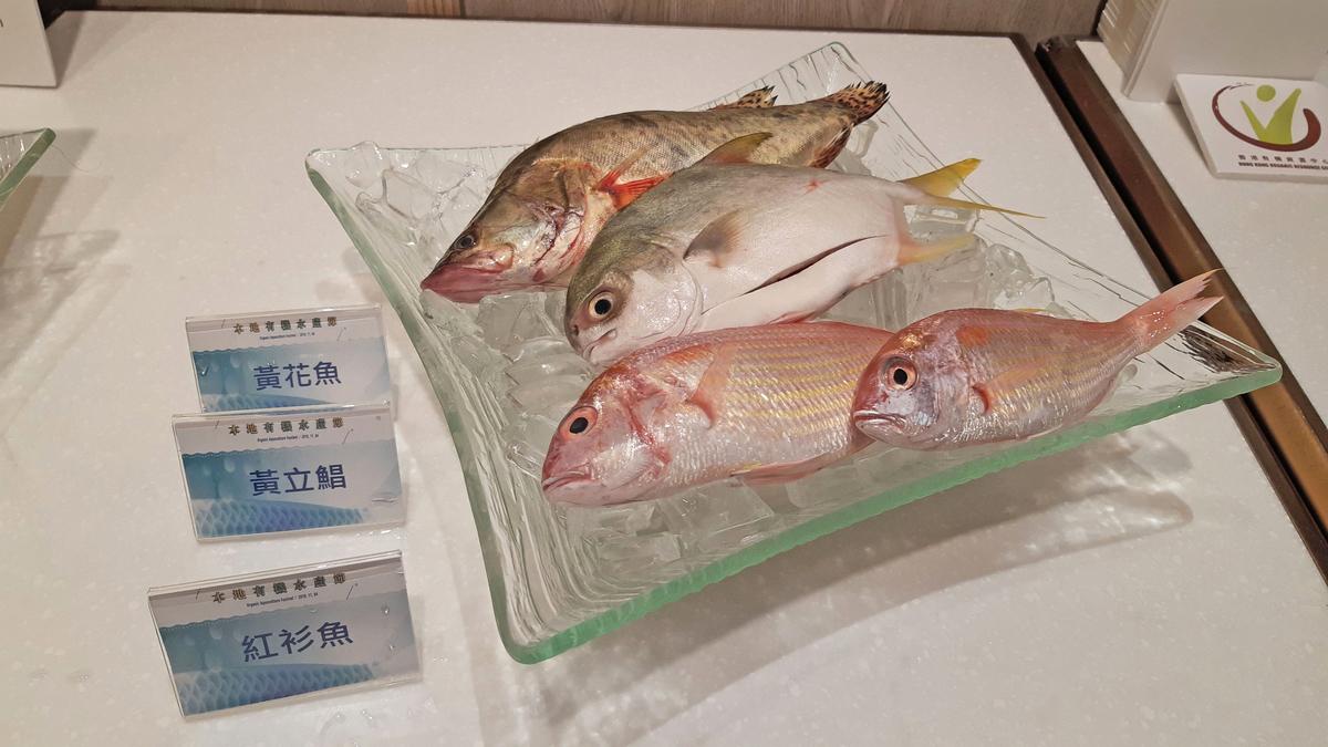 港人常食用的紅衫魚及黃花魚,均屬世界自然基金會(WWF)《海鮮選擇指引》中的「紅色—避免」類別。(cool factory提供)