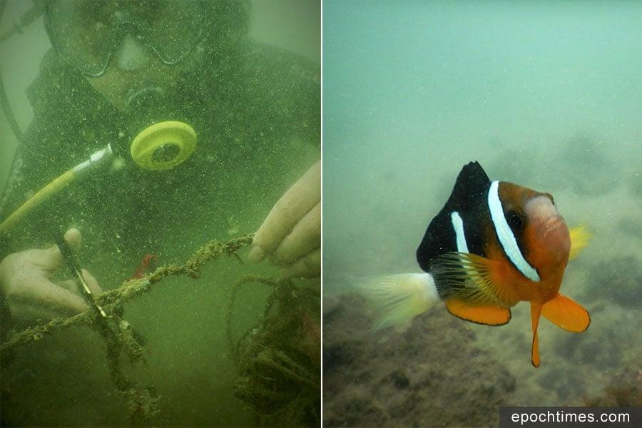 Teresa Liu(左)在水底幫忙解救被困住的海洋生物,期間在海底見到很多小丑魚(右),捍衛自己的家園,引發她反思如何為自己家園做得更多。(受訪者提供)
