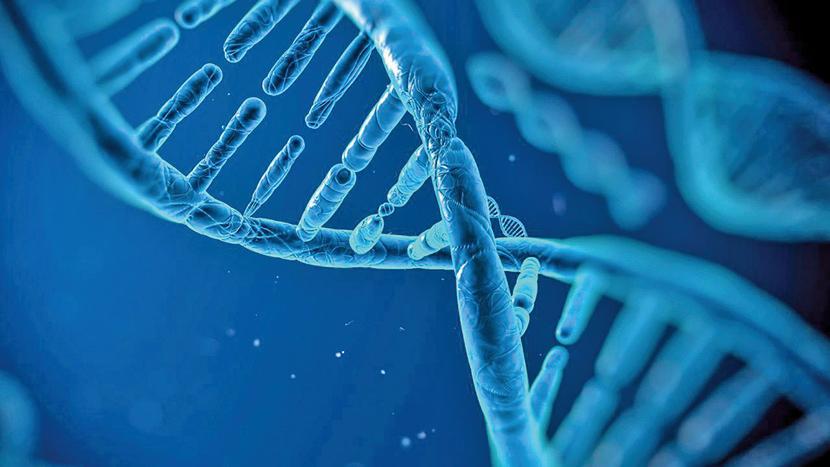 最新研究發現,人類對壽命的掌控超過了基因的影響,家庭環境、鄰里關係、文化、教育、醫保這些因素,對壽命長短影響很大。(VITALIY SMOLYGIN/ISTOCK)。