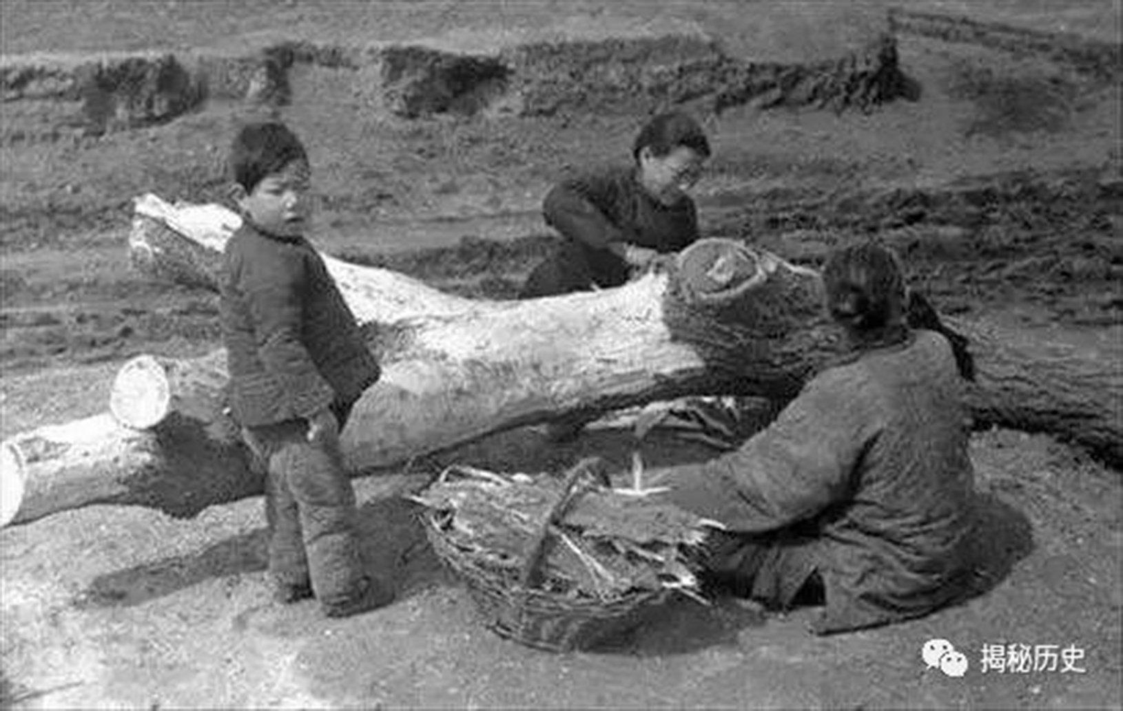 毛澤東一意孤行「高舉三面紅旗」的錯誤政策,造成全國糧荒,餓死大量老百姓,圖為飢民刨樹皮吃。(網絡圖片)