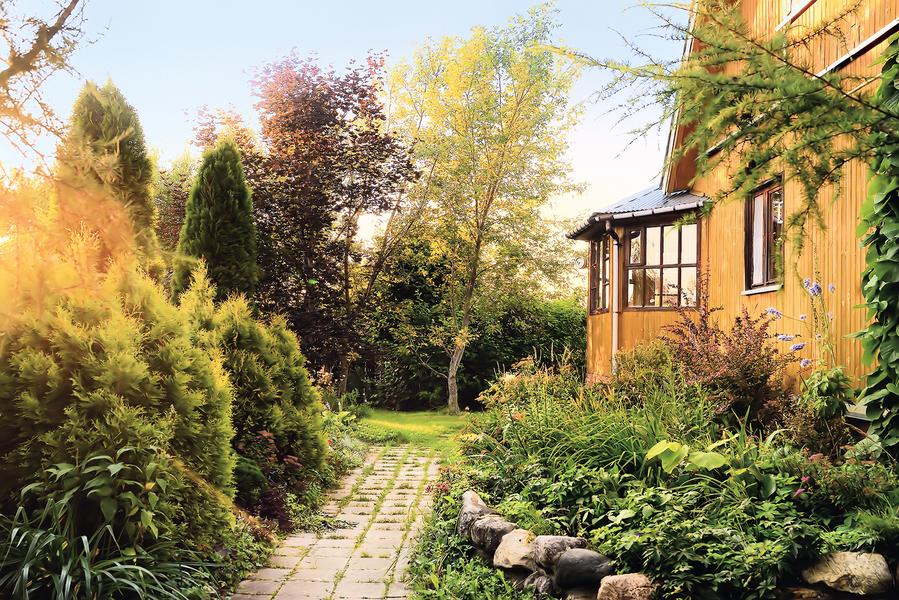 心靈陽光 曾老師家的花園