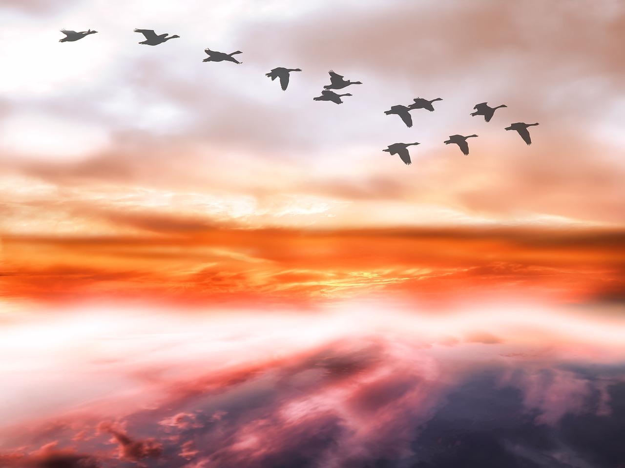 「飛成行、止成列」,象徵家庭的倫常有序、不相踰越。(pixabay)