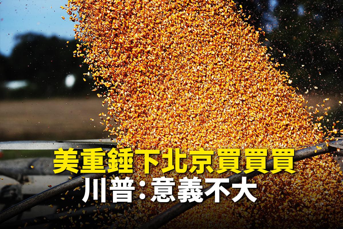 美重錘下,北京近日大量購買美國農產品,特朗普:意義不大。(大紀元合成)