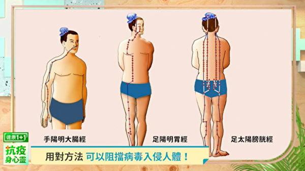 若要抵抗病毒,要加強陽經的防線,特別是大腸經、胃經和膀胱經。(健康1+1/大紀元)