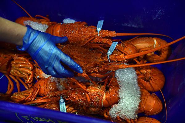 港府官員稱澳洲龍蝦涉「國家安全」問題 打臉中共