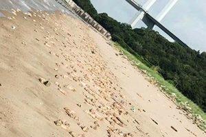 東莞海灘驚現上萬豬腳和內臟 遍佈海岸線