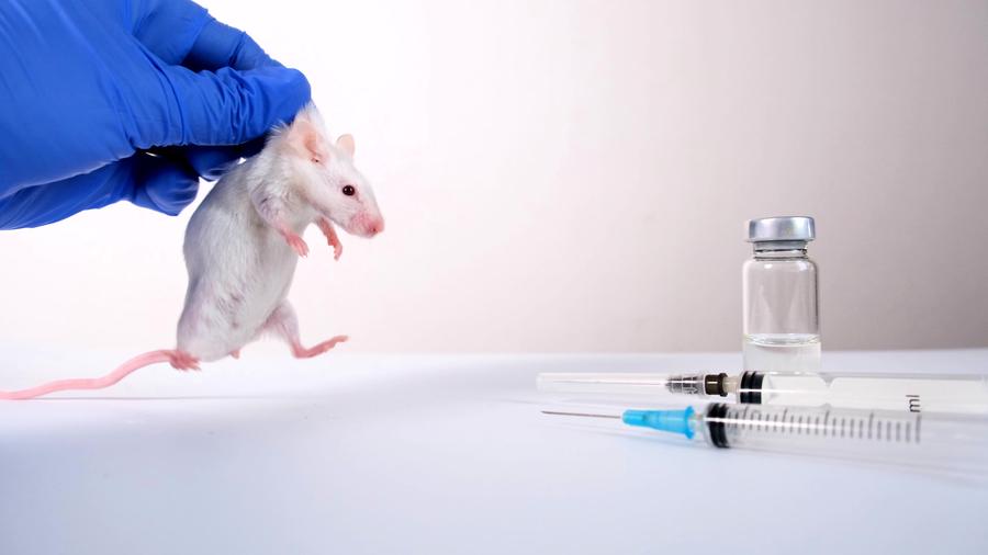 為甚麼實驗室「白老鼠」多為雄性?