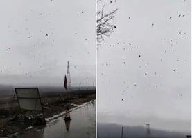 【現場影片】牡丹江慶豐村成群鳥兒飛過天空