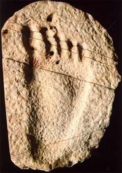 光腳小孩腳印化石(明慧網)