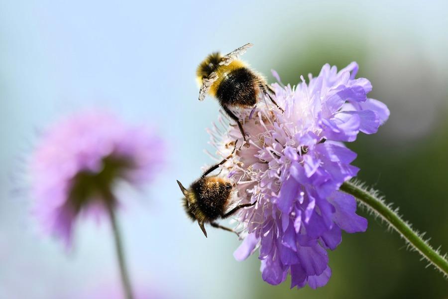 眼見為憑! 巴西兩隻蜜蜂合力打開汽水瓶蓋