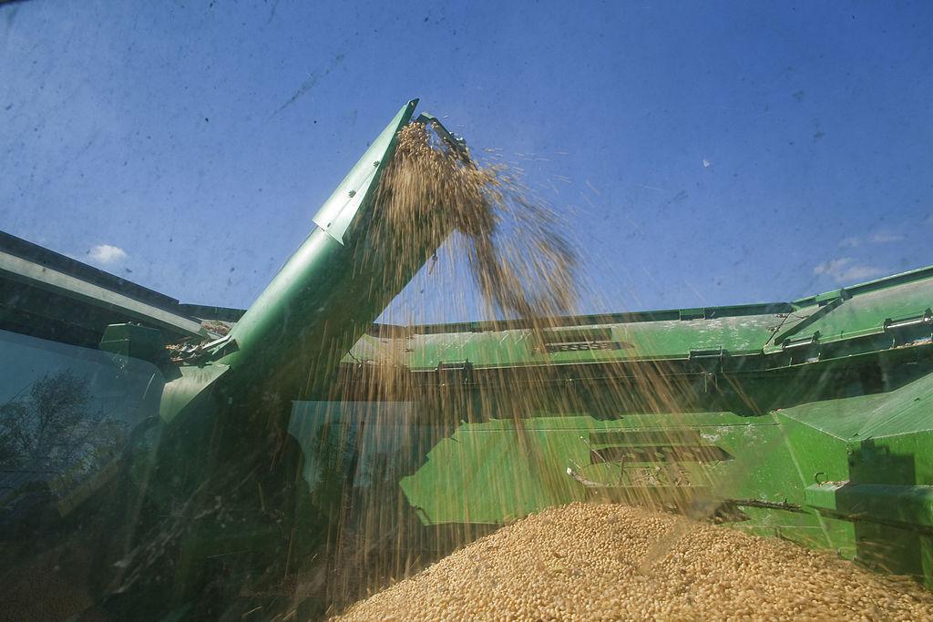 圖為美國大豆。(Darren Hauck/Getty Images)