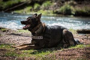 協警緝獲逾九十磅毒品 美加州巡邏犬立大功