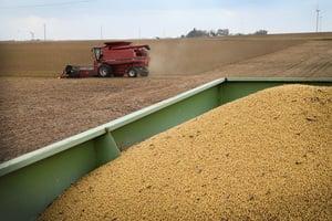 貿易談判後中共從巴西買豆 美國沒接到訂單