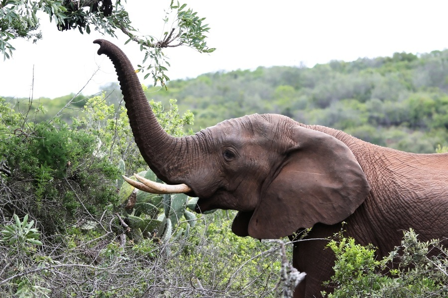 瀕死大象獲救 12年後認出恩人 伸長鼻打招呼