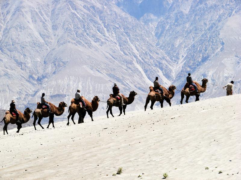 「增援」中印邊境 印軍派駱駝執行高海拔任務