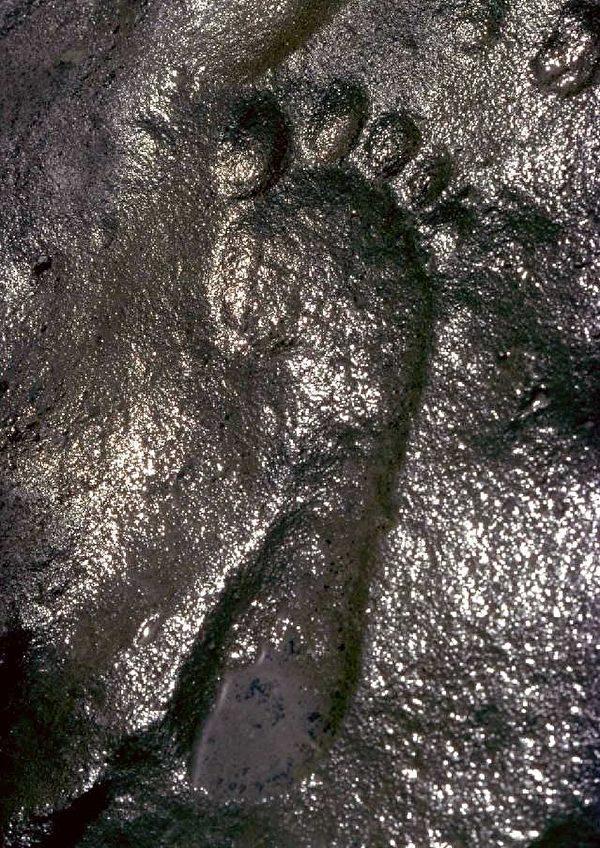 扎帕塔足跡化石(明慧網)