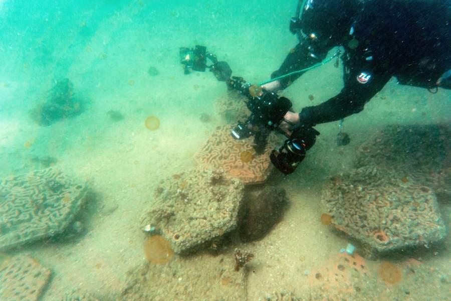 3D打印為香港周邊海域的珊瑚找到新家