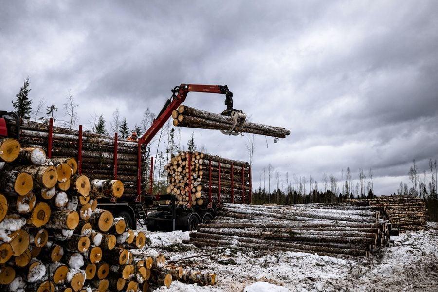 俄羅斯法院審理大規模木材走私 多名中國公民涉案