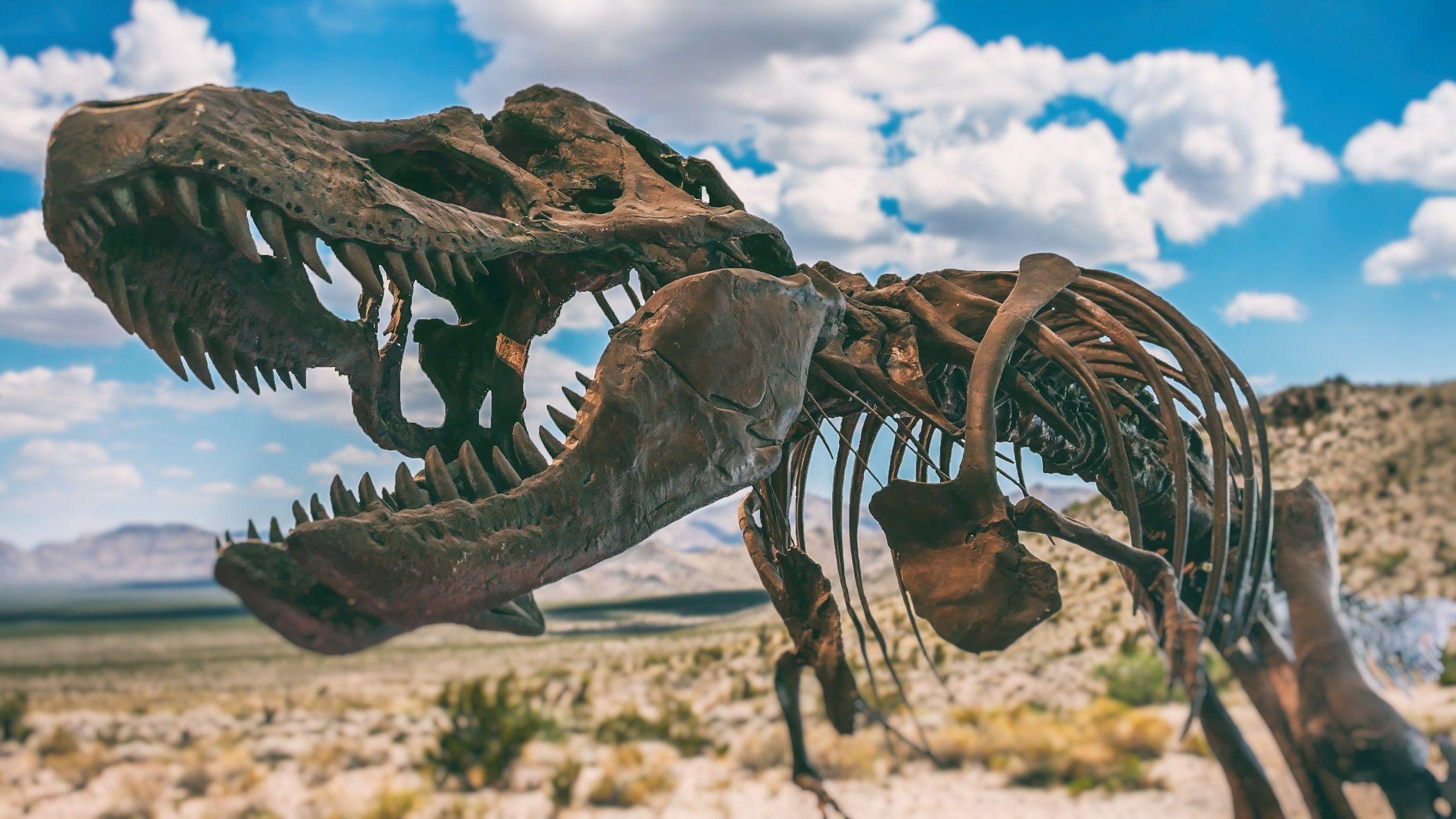 恐龍骨骼示意圖。(ShutterStock)