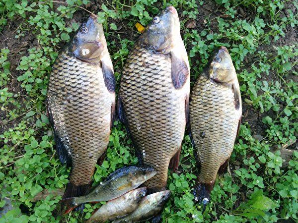 魚資料照,圖為示意圖。(PxHere)
