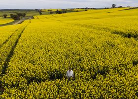 澳洲下月推出農業簽證 工作三年後可申請永居