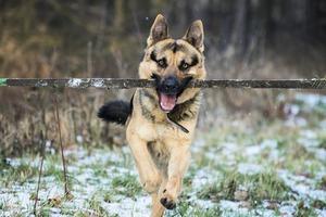小狗幫盲人移除路障 網民:比人還有同情心
