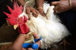 歐洲爆新一輪禽流感?德國瑞士率先披露