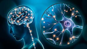 研究:受傷脊髓成功再生神經元細胞