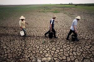 大陸農田土壤惡化嚴重 糧食自給率逐年下降
