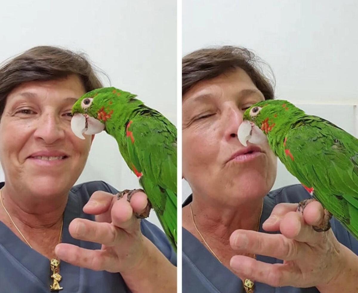 瑪麗亞博士和獲得救援後的鸚鵡甜蜜合照。(Renascer ACN提供)