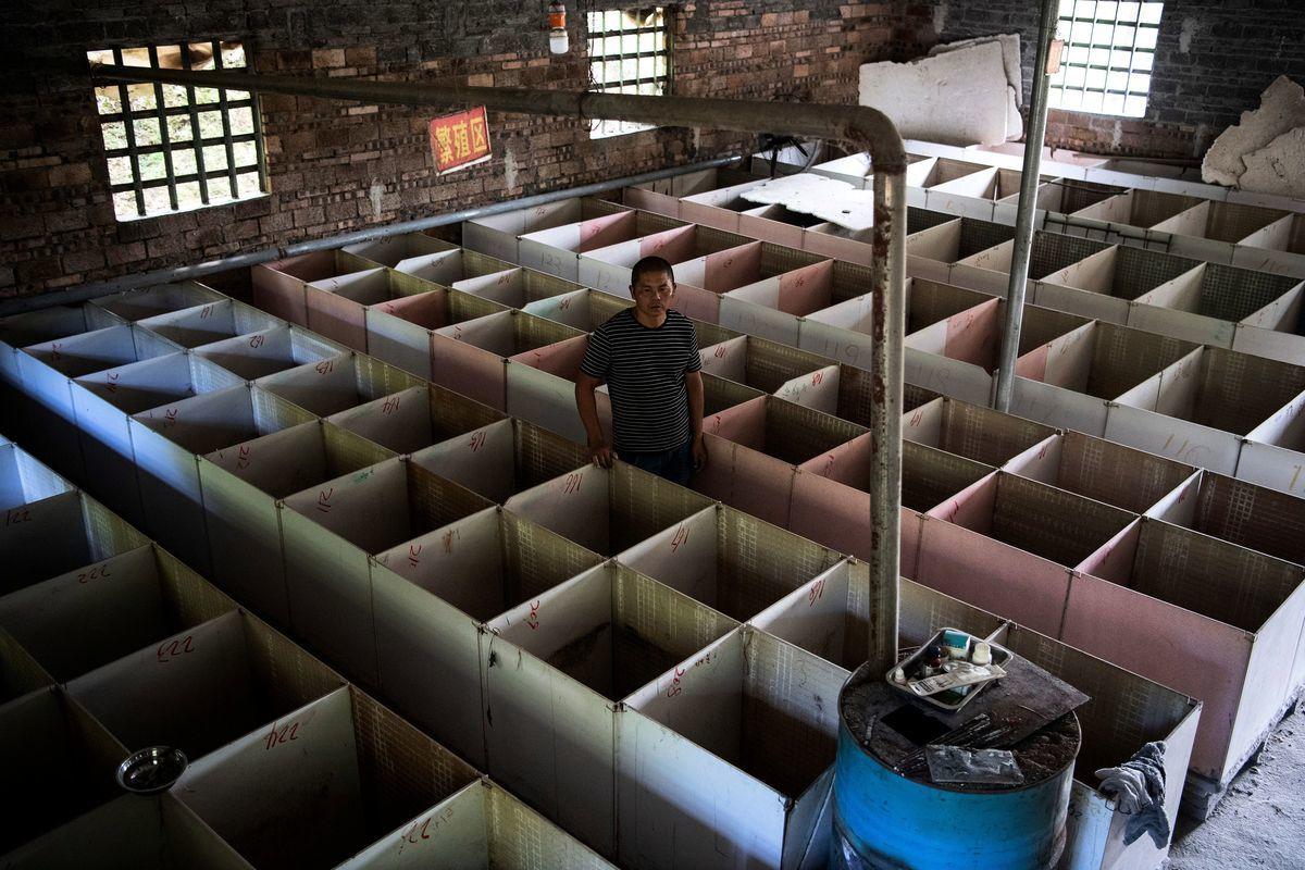 在中共病毒的疫情下,中共當局大力鼓吹的「脫貧項目」特種養殖業遭重創。圖為2020年8月14日,竹鼠養殖者黃國華正在拆除他在湖南邵陽市隆回縣的竹鼠養殖場內的籠子。(NOEL CELIS/AFP via Getty Images)