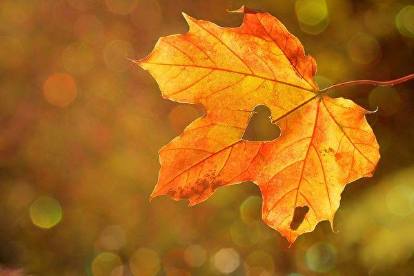 晝夜平分寒暑交替 秋分講求陰陽平衡 重「養收」