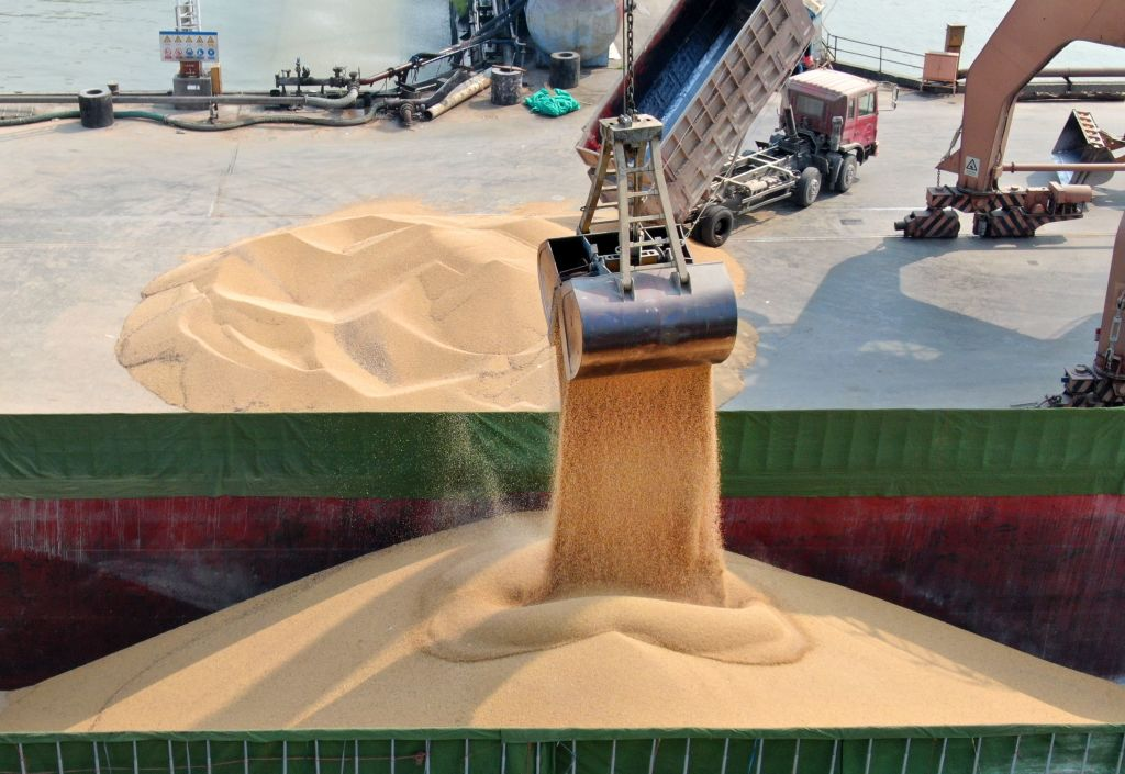 中共政府已批准五家進口公司每家可購買200萬~300萬噸美國大豆,並獲得25%的報復性進口關稅豁免。圖為美國大豆。(STR/AFP/Getty Images)