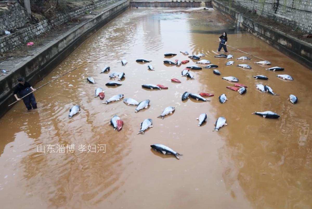 山東淄博的岳陽河由於污染嚴重、變色,被當地人戲稱為「小黃河」。(影片截圖)