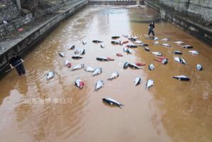 曝山東水污染 微信公眾號被6招威脅撤稿