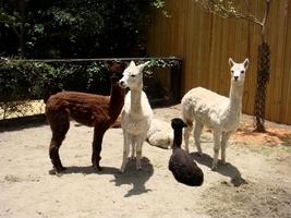 疫情下長沙一動物園多種動物餓死 屍體變乾