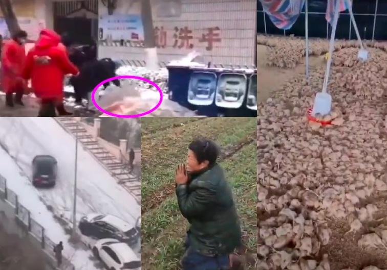 大陸多省降雪多地停課 環衛工人、雞苗被凍死