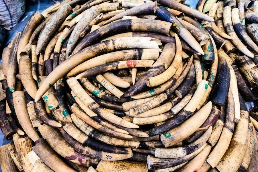 坦桑尼亞「象牙走私女王」楊鳳蘭獲刑15年