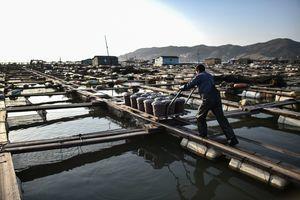 美政府報告指中國漁業人口販賣最嚴重